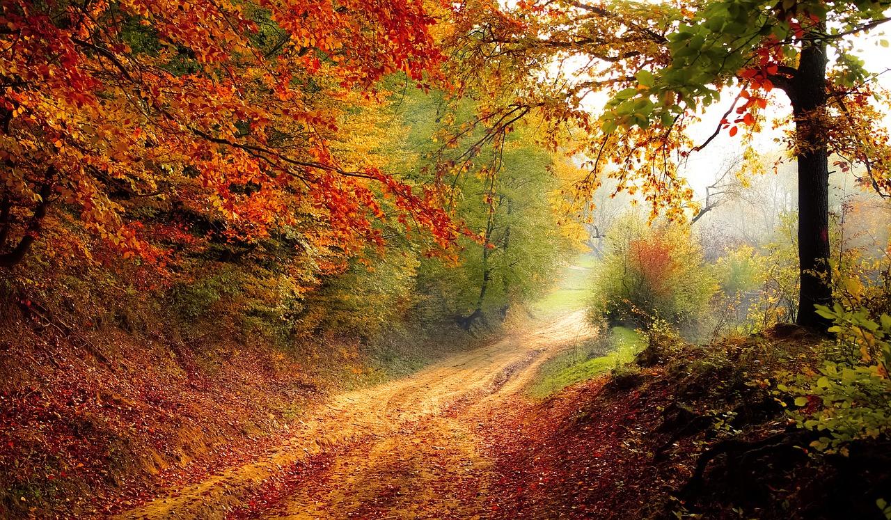 Báseň o podzimu - texty nejenom pro děti